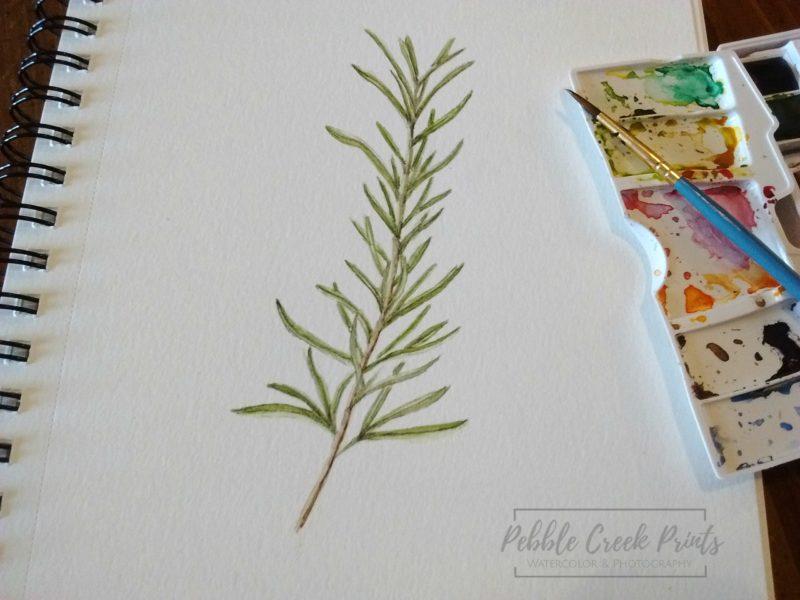 Pebble Creek Prints - rosemary