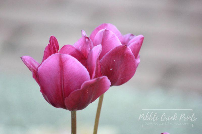 social-media-share-flower